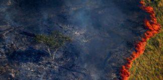 Devastação da floresta também é prejudicial à saúde (Bruno Kelly/Reuters)
