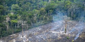 No Pará, MPF investiga contratação de sistema privado para monitorar desmatamento