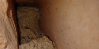 Túnel é encontrado no CRF de Ananindeua, na Grande Belém. — Foto: Reprodução / Susipe