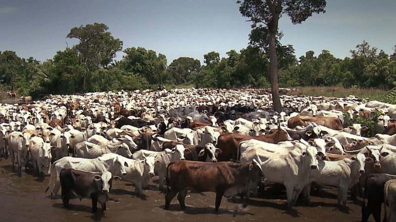 Rebanho bovino de Marabá cresce 102%
