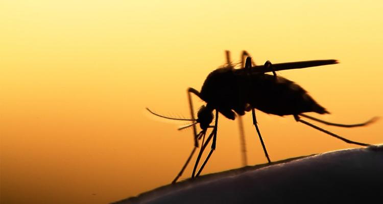 Novo estudo mostra que erradicação da malária será possível até 2050