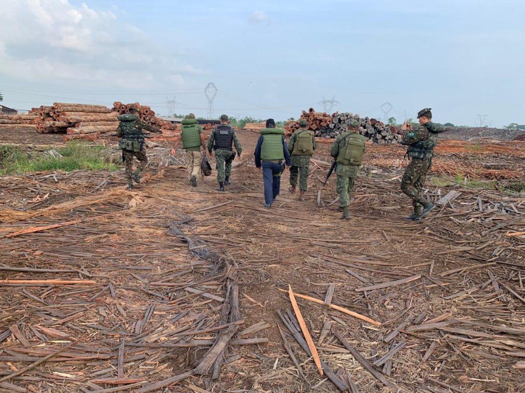 Operação Verde Brasil apreende mais de 300 toras de madeira ilegal no PA