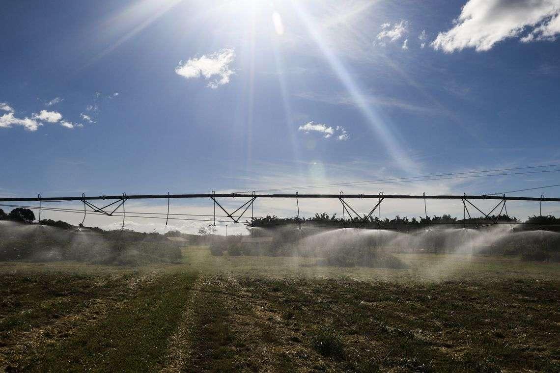 Censo Agropecuário: Brasil tem 5 milhões de estabelecimentos rurais